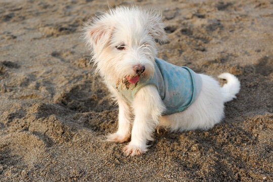 A cute dog relax in the sand on the beach