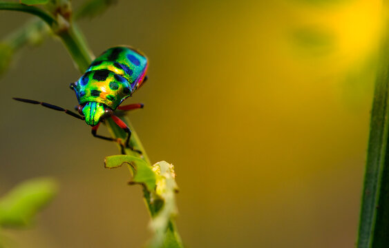 close up beautiful green ladybug on branch tree in nature at Thailand