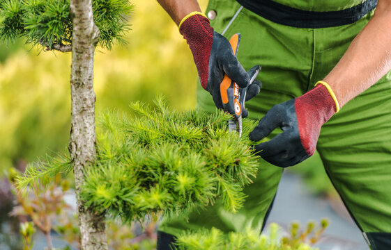 Men Trimming Garden Tree Branches