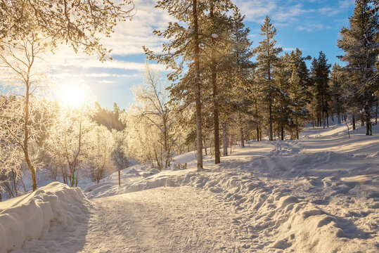 Snowy forest landscape at sunset, frozen trees in winter in Saariselka, Lapland, Finland