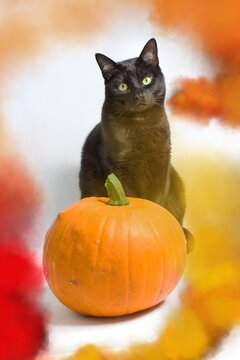 A black cat with green eyes sitting behind a pumpkin in yellow, red and orange smoke.