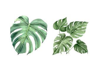 watercolor set with tropical plants, green leaves on white background close up