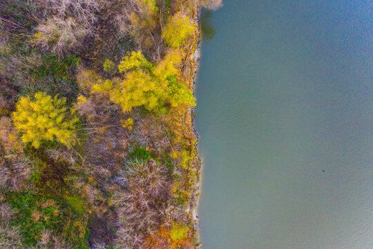Autumn forest near the lake. Yellow trees and blue water. Top view. Drone shot. Aerial photo