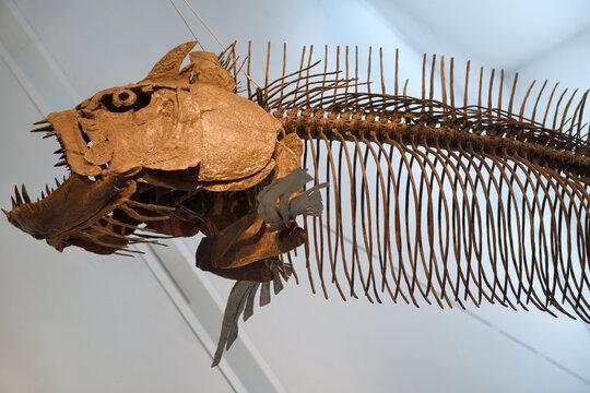 Giant fish skeleton of Xiphactinus audax of the Late Cretaceous Period 85 million years old Toronto Royal Ontario Museum Toronto, Canada - February 20, 2018