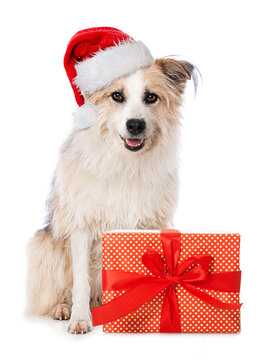 Cute dog with santa hat and a christmas gift