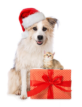 Cute dog and cat with santa hat and a christmas gift