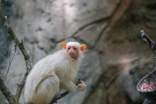 Monkey On Tree Against Wall