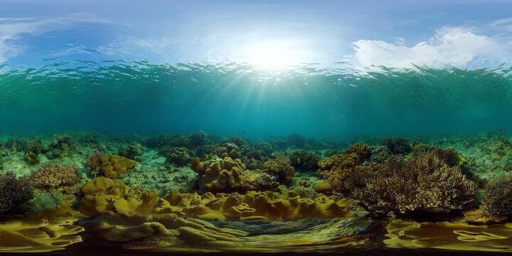 Marine life sea world. Underwater fish reef marine. Tropical colourful underwater seascape. Philippines. Virtual Reality 360.