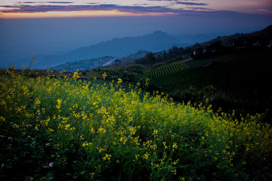 beautiful yellow flower against blue mountain range in tubberk thailand