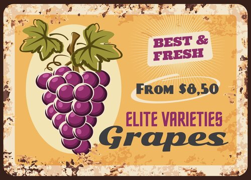 Grapes rusty metal plate, vector vintage rust tin sign with bunch of ripe grape with leaves. Vineyard production advertising retro poster with price tag, wine factory or shop promo, ferruginous label