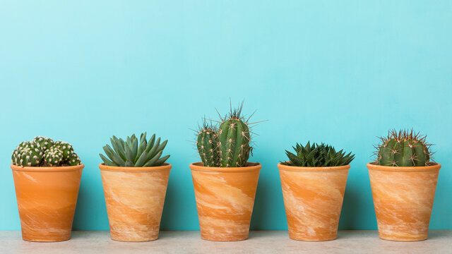 Succulent and cactus plants in clay flower pots on a shelf banner with sky blue background