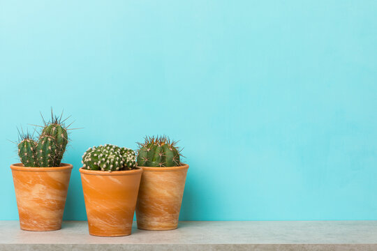 Three potted cactus plants on a shelf with copy space on sky blue background