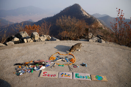 A stray cat wanders near an artwork made from litter collected by members of Clean Hikers during their hikes, on the peak of a mountain in Incheon, South Korea