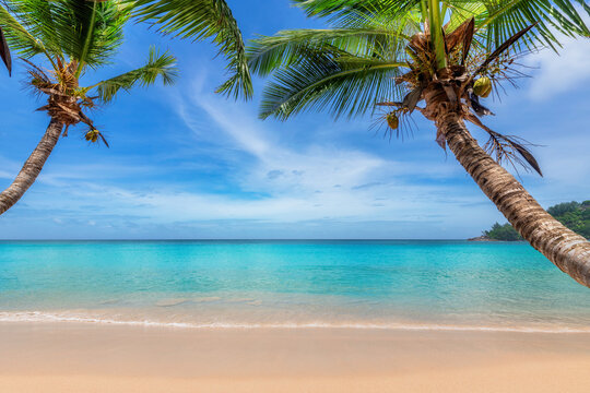 Tropical sunny white sand beach with coco palms and the turquoise sea on Caribbean island.