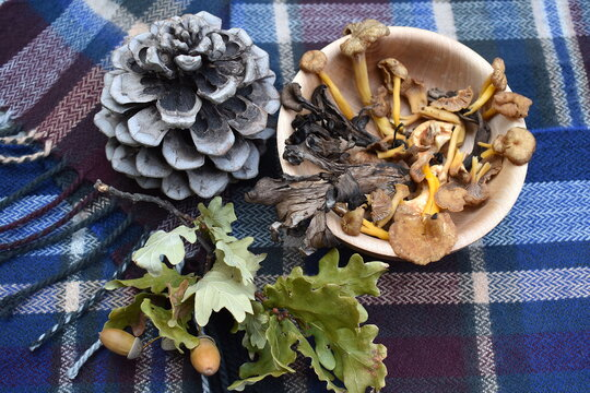 Wild mushroom mix includes yellow leg Chanterelles Pied de Mouton known in England as Hedgehog fungus, Trompette de la Mort and Girolles Sourced in Europe where mild wet climate is ideal for mushrooms
