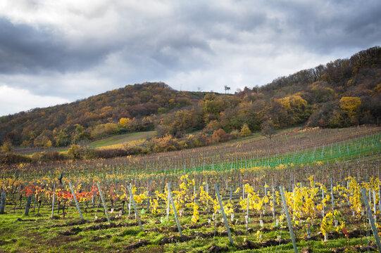 Autumnal vineyards in Burgenland near Eisenstadt