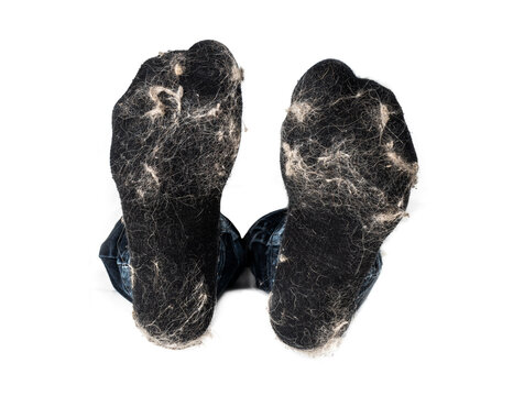 Socks with animal fur. A pair of black wool sock with clumps of cat hair. Concept for how to reduce unwanted pet hair from laundry or clothes or time to cleanup and vaccum. Isolated on white.