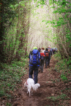 Group Of Hikers Proceed In Single File Through A Forest Path.