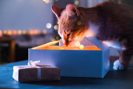 Christmas gift box with sparkles, cat at night miracle