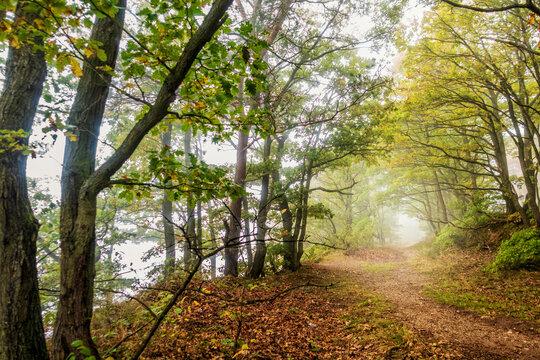 Erster Herbstnebel auf dem Mosel-Höhenweg bei Bernkastel-Kues