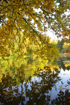 Lake in autumn with colorful leaves on trees fall season