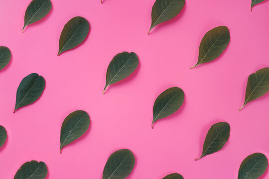 Close-up Of Green Leaves Against Pink Background