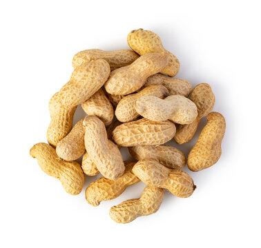 Peanut on a white