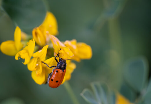 Bug over yellow flower and blurred background