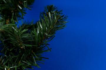 Fototapeta Zielone gałązki choinki na różnych tłach. obraz