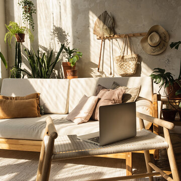 Boho style modern home interior design. Laptop, sofa, pillows, home plants, carpet and decorations against concrete wall. Bohemian sitting room with warm sun light shadows on the wall.