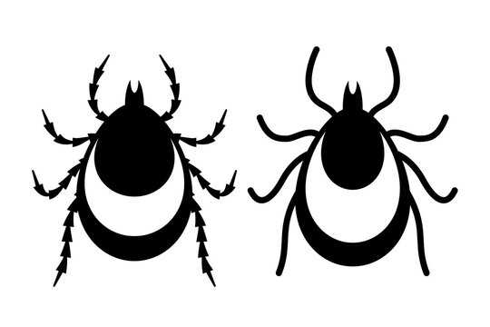 Tick insect vector icon