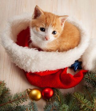 Ginger Kitten in santa hat on Christmas background and fur tree