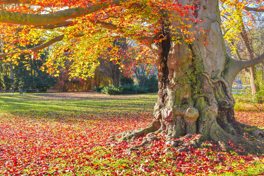 Colorful and vivid autumn colors and bright blue sky in the park, in Graz, Styria region, Austria.