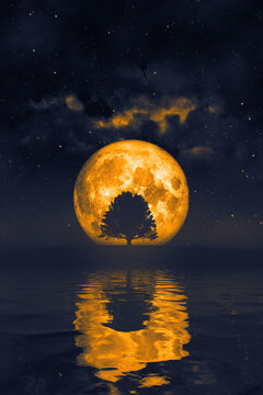 orange moon and a tree