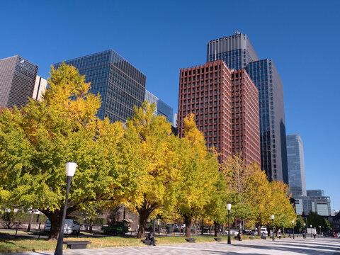 東京都 丸の内オフィスビル街とイチョウ並木