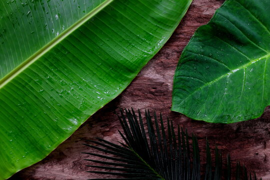 Natural green tropical jungle flat lay background of banana, palm and colocasia leaves in dark wooden backdrop.