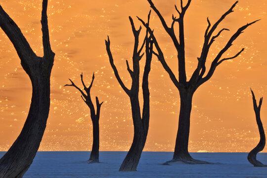 Dead Vlei, Sossus Dunes, Namibia