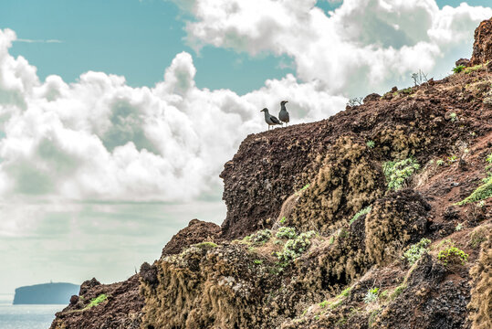 two birds sitting on rocky cliffs clear water of Atlantic Ocean at Ponta de Sao Lourenco, the island of Madeira Portugal