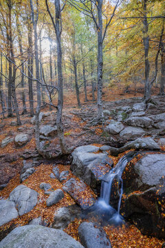 Small brook in a colorful autumn forest. Long exposure picture