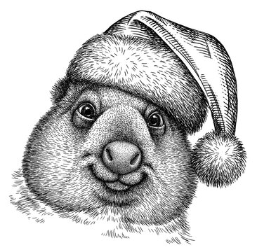 black and white engrave isolated wombat illustration