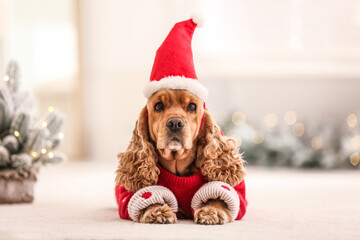 Adorable Cocker Spaniel in Christmas sweater and Santa hat on blurred background