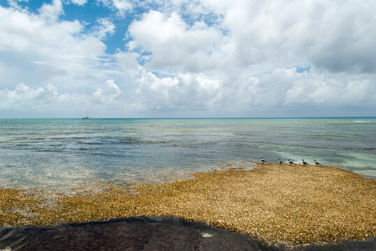 Grand Turk Island Beach Landscape With Seagulls