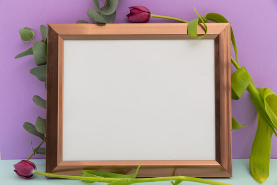 Wooden frame with white background with tulips on purple background