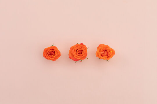 Three orange roses in a row lying on pink background