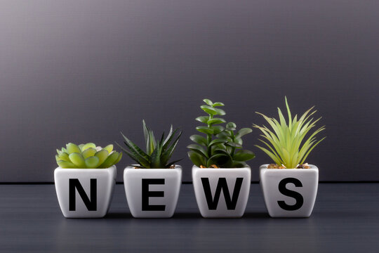 Text NEWS on white ceramic flowerpots with houseplants on a dark wooden table. Media concept.