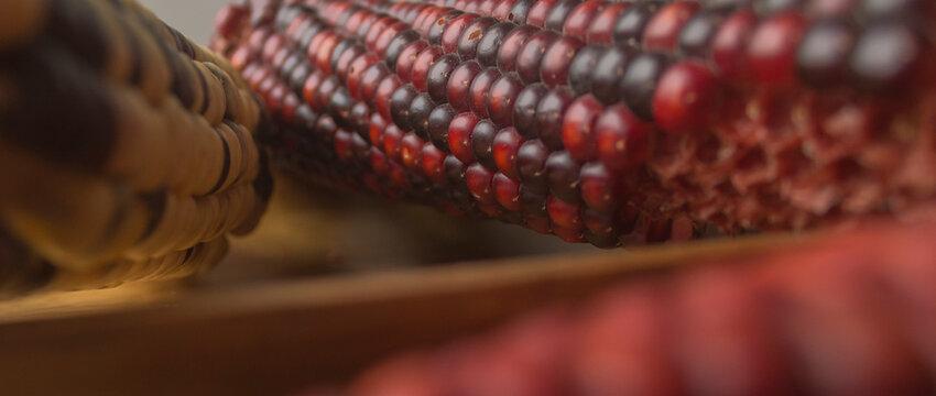 comida, maíz, ciudad de México, cosecha, cosecha, frescura, nutrición, fondo, maíz dulce, inca, sierra, maíz, granja, cereal, saludable, grano, madera, blanco, dulce, comida mexicana, comida orgánica,