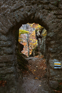 Forest in Karkonosze National Park