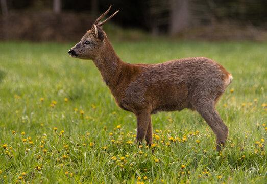 Deer on a field.