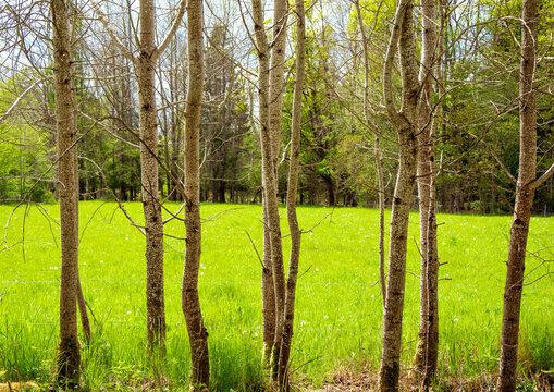 Green field seen through trees.