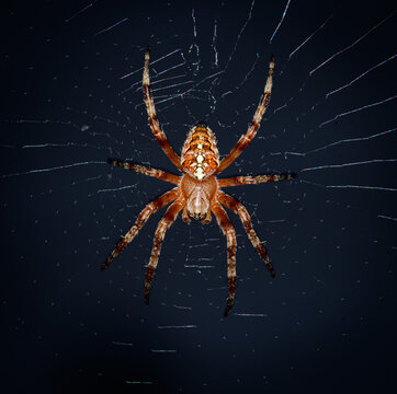 Close up of a spider.